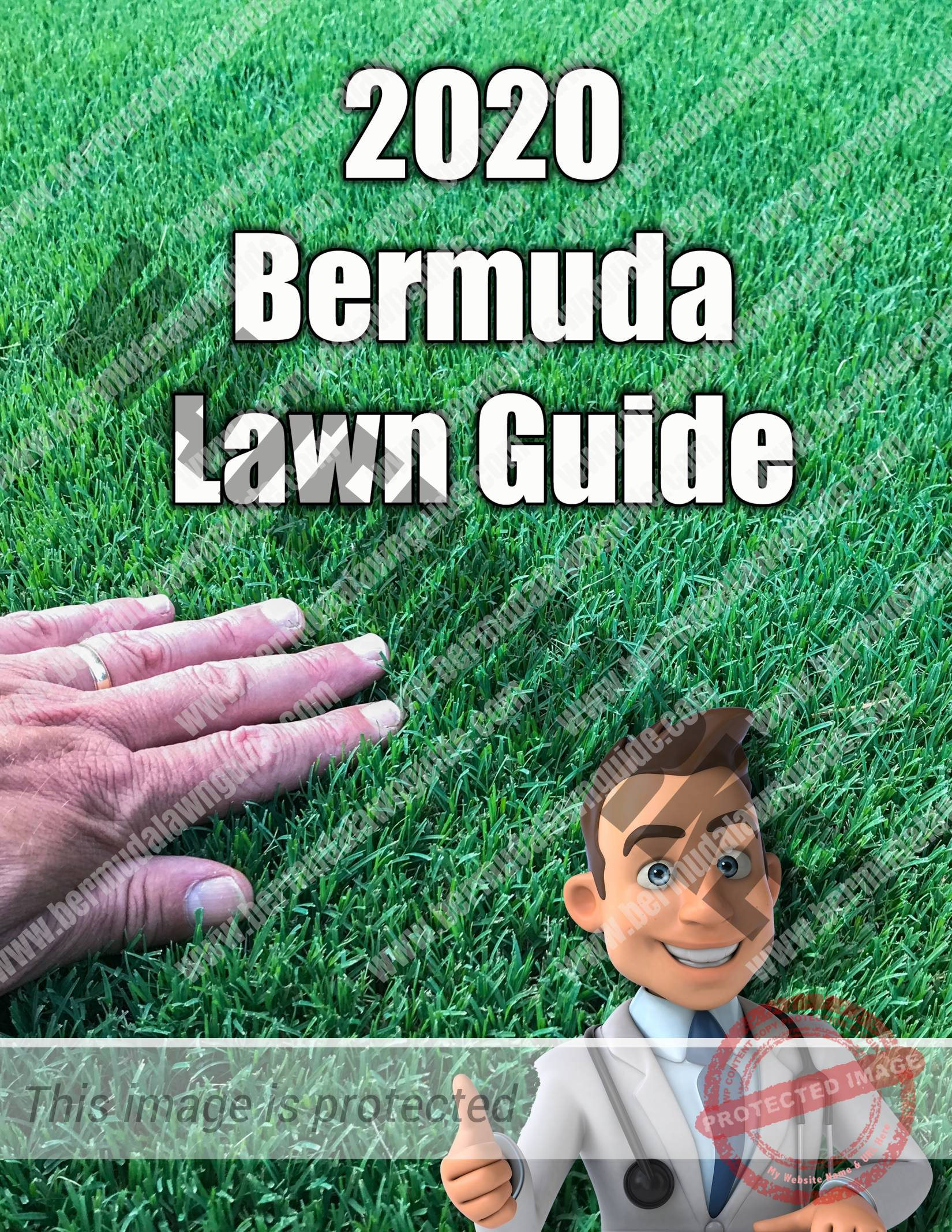 Bermuda Lawn Guide - How to care for bermuda grass.